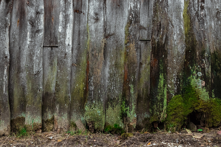 Old, wooden background, old boards covered with moss, mold, rot. The concept of time, fungus, unsanitary conditions, old age. 版權商用圖片