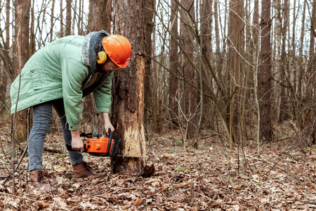Logging, Worker in a protective suit with a chainsaw sawing wood. Cutting down trees, forest destruction. The concept of industrial destruction of trees, causing harm to the environment. Stock Photo