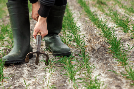 Closeup of farmer's hands, hoe and field in spring. The concept of the garden, the beginning of the season, summer cottage.