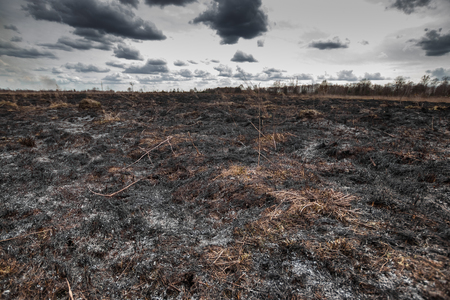 Scorched earth, spring fires. A field with burnt grass. The destruction of insects. Stock Photo
