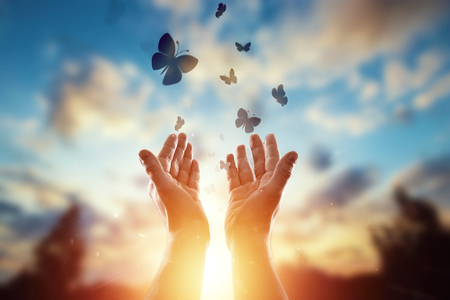 Hands close up on the background of a beautiful sunset, a flock of butterflies flies, enjoying nature. The concept of hope, faith, religion, a symbol of hope and freedom. Stock Photo