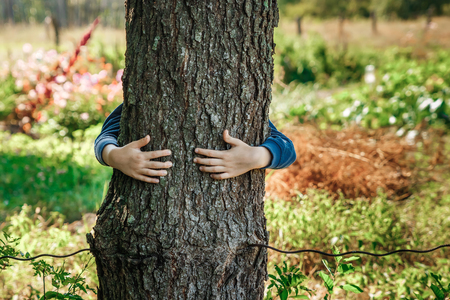 Humans hands hug, wrap a tree. Contact man and nature, the concept of ecology. Productivity. Symbiosis Imagens