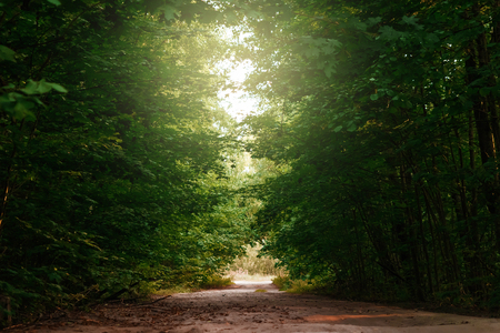 High trees with green leaves along a forest trail with a wooden corridor. Creative, magical background, fantasy.