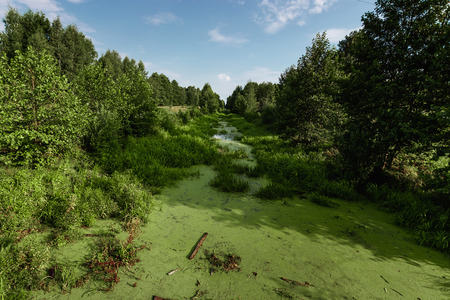 The picture was taken in June.The picture shows a river whose water is covered with duckweed and mud. Stock Photo