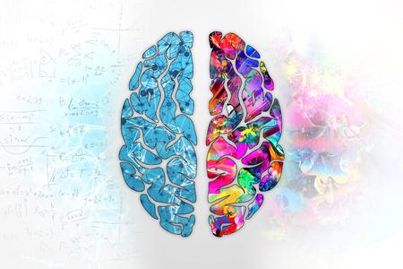 Ilustración de un cerebro humano, vista superior. Diferentes mitades del cerebro humano. La mitad creativa y la mitad lógica de la mente humana. Foto de archivo