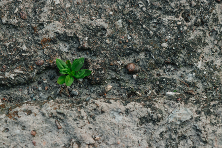A small green sprout makes its way through concrete. The concept of struggle, confrontation. Close-up. Copy space. Reklamní fotografie
