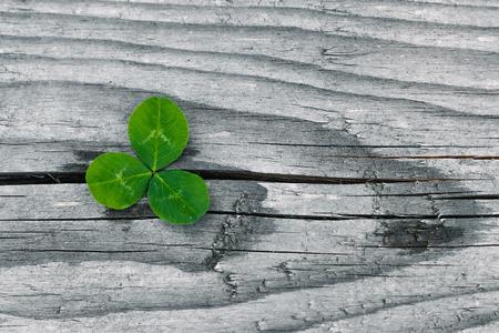 Clovers on grunge old aged wooden background, shamrock leaves, saint patrick's day Reklamní fotografie - 123125210