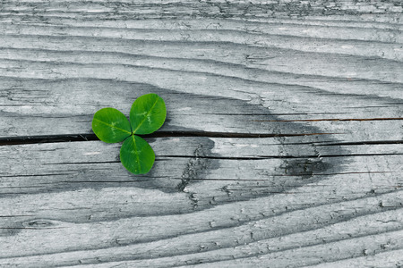 Clovers on grunge old aged wooden background, shamrock leaves, saint patrick's day Reklamní fotografie - 123125211