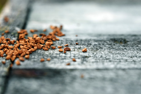 Soluble coffee is scattered on a gray wooden background. Close-up. Copy space. Imagens