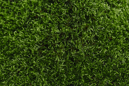 green moss background texture beautiful in nature Imagens