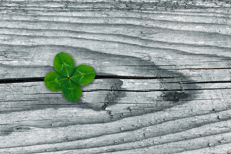 Clovers on grunge old aged wooden background, shamrock leaves, saint patricks day