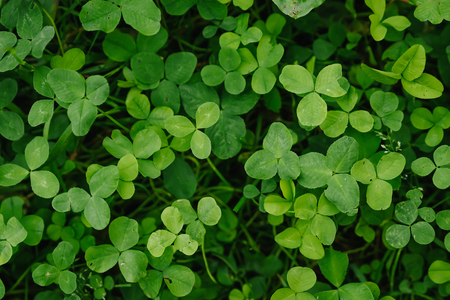 Leaf clover green floral background Imagens