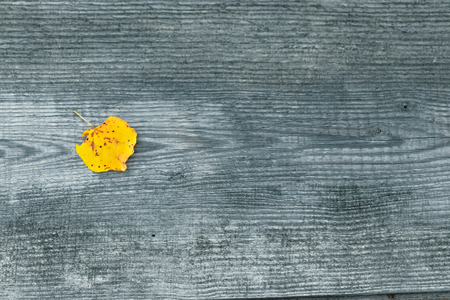 Yellow leaf on a wooden gray background. The concept of autumn, loneliness. View from above. Copy space.