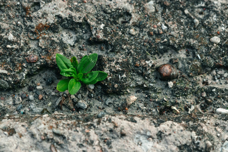 A small green sprout makes its way through concrete. The concept of struggle, confrontation. Close-up. Copy space. Imagens
