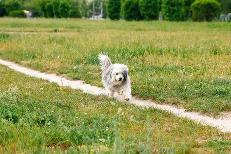 Happy puppy running through a meadow Banco de Imagens