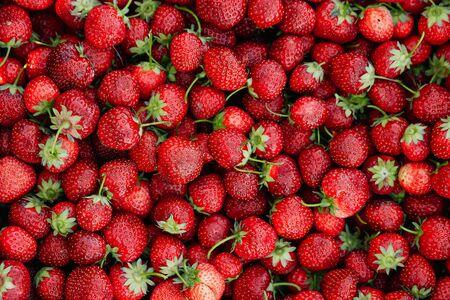 Strawberries - lots of strawberries