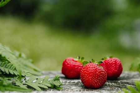 Strawberries on a wooden gray table on a green background, leaves of paparatnik, strawberry season. opy space for text,