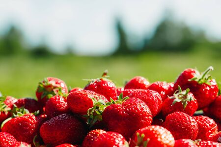 A lot of strawberries on a green background, a season of strawberries. Фото со стока