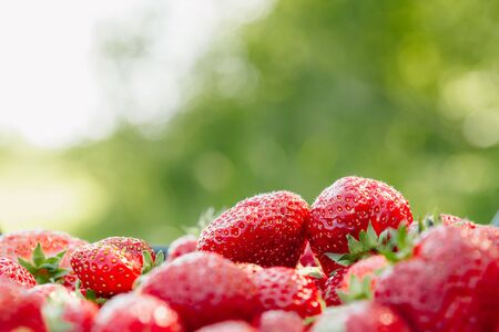 A lot of strawberries on a green background, a season of strawberries.