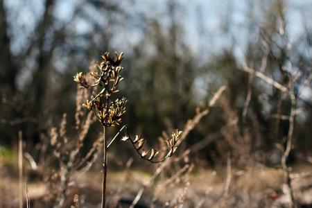 dry grass red grass, drought, autumn.