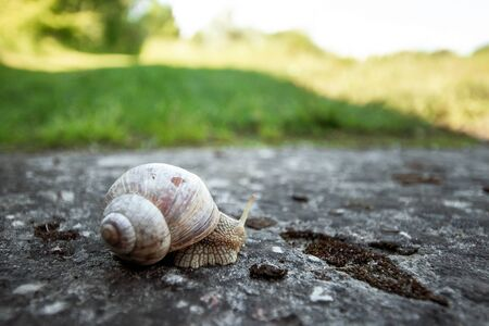 Background, nature, snail crawling on a stone in the park, close-up, soft focus. Snails in the city park. Wildlife, speed, armor.