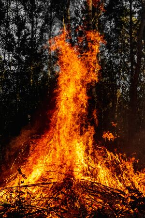Forest fires, fire in nature, the destruction of tree plants