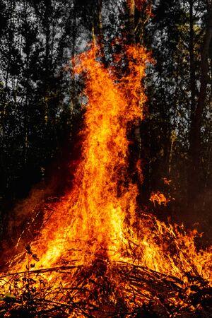 Incendi boschivi, incendi in natura, distruzione di piante arboree