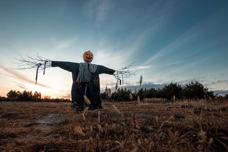 Scary scarecrow with a halloween pumpkin head in a field at sunset. Halloween background, copy space