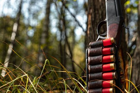 Hunting rifle and cartridges in the autumn forest close-up. The hunting period, the fall season is open, the search for prey Stok Fotoğraf