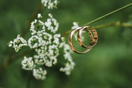 wedding rings on a branch .The concept of marriage, family relationships, wedding paraphernalia. Stock Photo