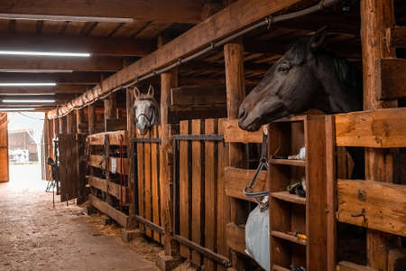 Horses standing in a stall in a stable. Jockey, hippodrome, horseback riding