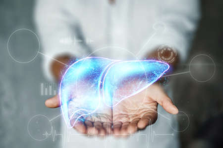 The doctor has a liver hologram in his arms. Human hepatitis treatment business concept, donation, disease prevention, online diagnosis