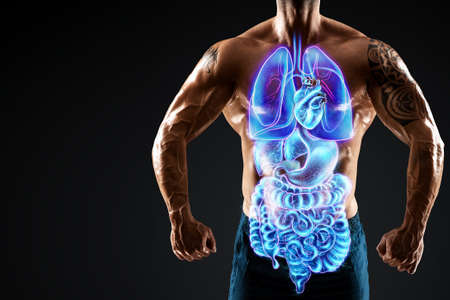 A holographic projection of a scan of human internal organs inside the body of a bodybuilder. The concept of modern medicine, digital x-ray, new technologies, human anatomy