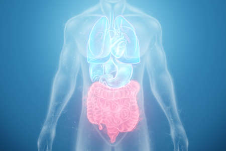 A holographic projection of a red irritable bowel scan with medical data. The concept of abdominal pain, bowel problems, constipation, modern medicine.3D illustration, 3D render