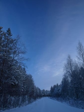 snowy raod through the forest photo