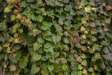 green background: green leaves background wall