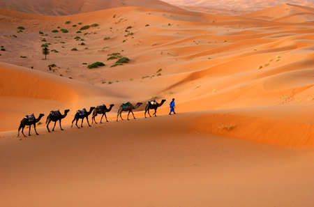 erg: Camel caravan going through the sand dunes in the Sahara Desert, Morocco.