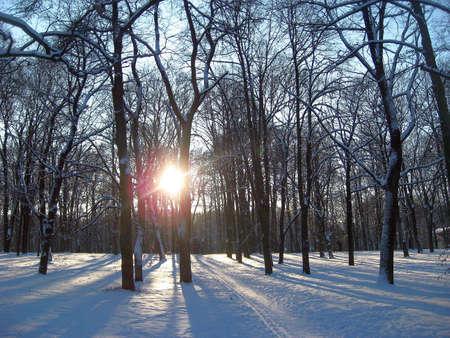 Big cemetary of Riga, Latvia in winter photo
