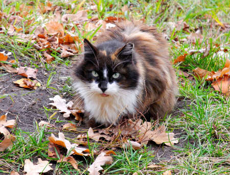 Katze im Herbst in Riga, der Hauptstadt Lettlands Standard-Bild - 12901586