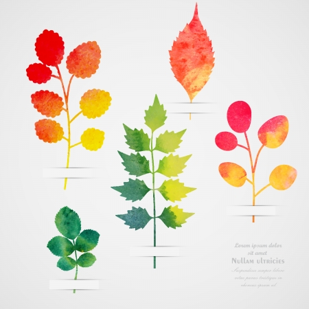 botanical drawing: Vector herbarium. Vintage template. Watercolor leaf. Collection of watercolor hand drawn leaves. Autumn seamless pattern with leaf. Autumn theme.