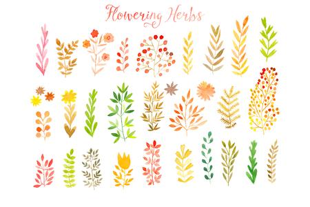 ilustração: Jogo das folhas de outono coloridas. Vector illustration.vector conjunto de folhas de aquarela outono vermelho e bagas, elementos desenhados mão do projeto.