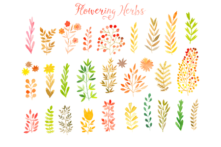 watercolor background: Set of colorful autumn leaves. Vector illustration.vector set of red autumn watercolor leaves and berries, hand drawn design elements.