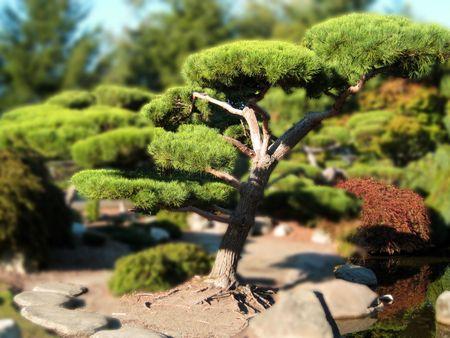 Bonsai Tree Illusion