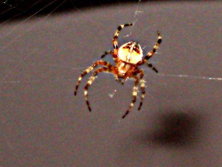 illuminated: Illuminated Spider Surfing the Web