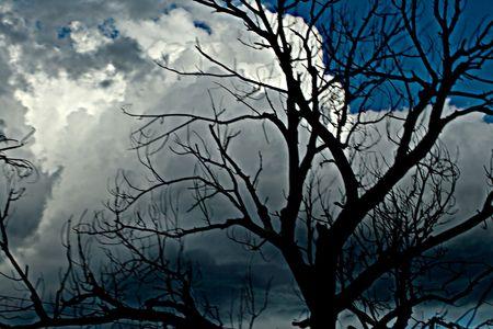 Silueta contra el �rbol azul y gris cielo de fondo