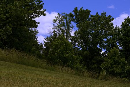 sloping: Meadows Trees Blue Sky and Clouds v1 is a nature background on a sloping hill