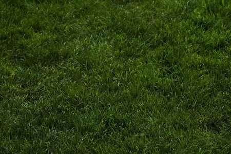 Antecedentes de Bellas hierba verde v1 llena el marco con el Focuse dirigido hacia el bajo centro de la imagen sobre cada uno de hojas de hierba