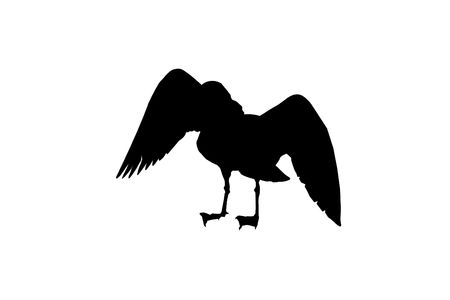 Bird with Wings Stretched out Silhouette isolated on a white background.