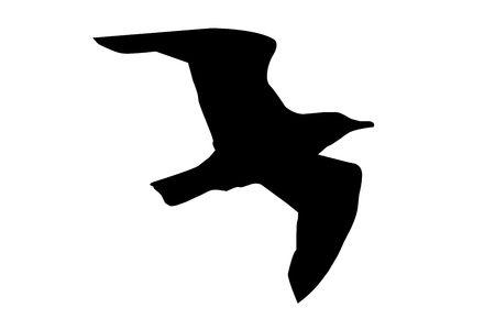 Vogel met vleugels uitgestrekt silhouet geïsoleerd op een witte achtergrond. Stockfoto