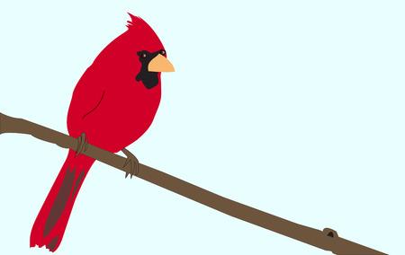 明るい赤い枢機卿の青い空を背景に設定ツリーの分岐図の上に座って。